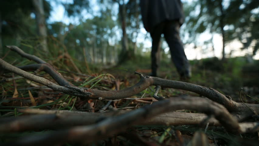 Man enters the forest, dolly shot, dry leaves and branches on ground