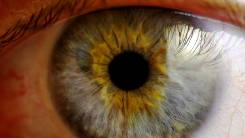 Human eye iris contracting. Extreme close up. | Shutterstock HD Video #9569450