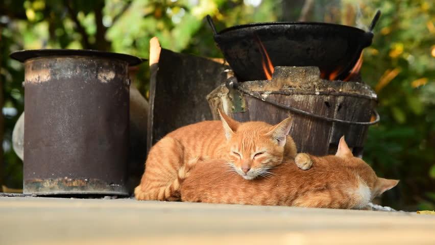 Cats sleep in temple around mandalay hill, Myanmar.