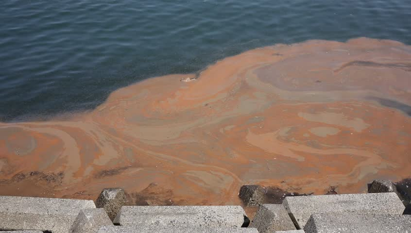 Red algae blooms in a sea in Japan