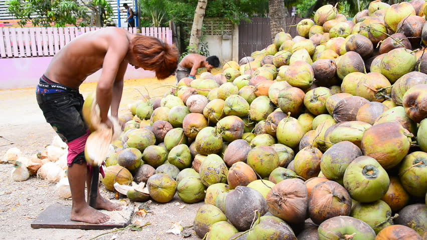 SAMUTSONGKHRAM THAILAND-APRIL 25 : Thai gardeners peeling coconuts use sharp knife, Thai traditional work. On April 25,2015 in Samutsongkhram Province ,Thailand.