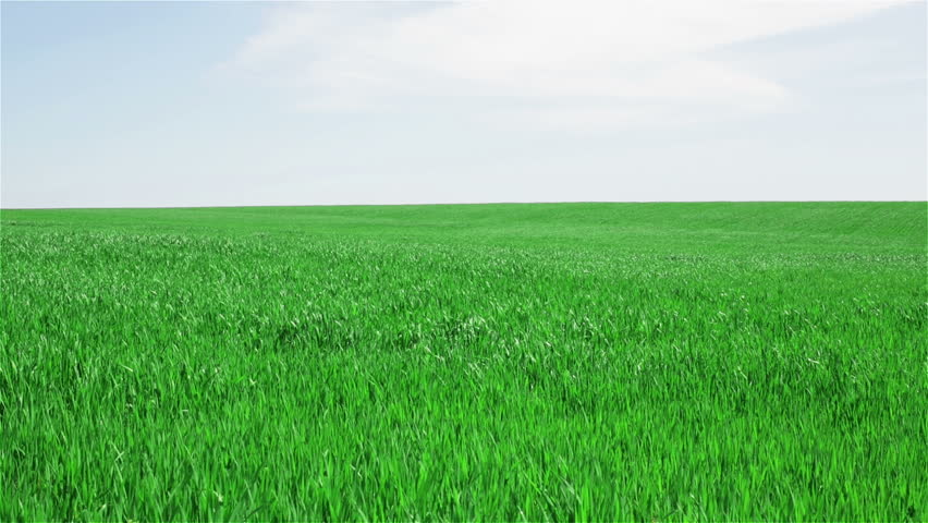 green field and blue sky with light clouds - HD stock footage clip