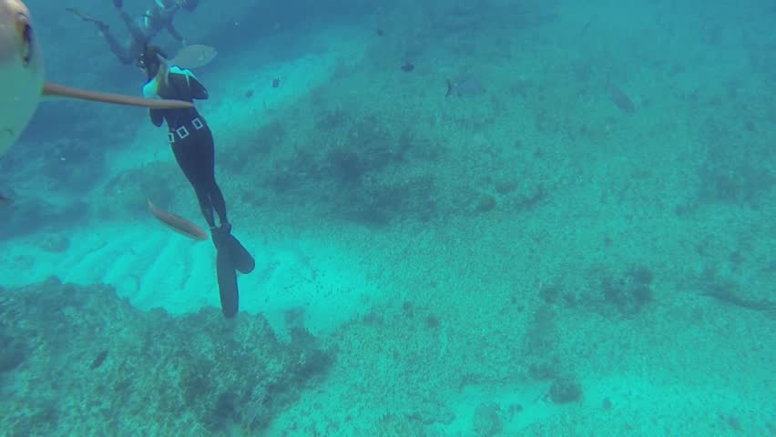 Beautiful full HD footage of curious Caribbean reef sharks (Carcharhinus perezii) in the Bahama's - HD stock footage clip
